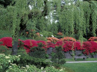 Japanese Garden Rhododendrons in Washington Park Arboretum, Seattle, Washington, USA by Jamie & Judy Wild