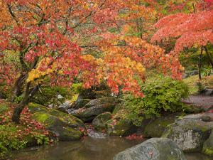 Japanese Garden, Washington Park Arboretum, Seattle, Washington, Usa by Jamie & Judy Wild