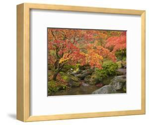 Japanese Garden, Washington Park Arboretum, Seattle, Washington, Usa by Jamie & Judy Wild