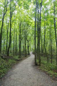 Michigan, Pictured Rocks National Lakeshore, trail to Miners Falls by Jamie & Judy Wild
