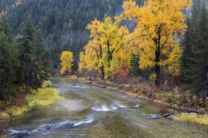 Montana, Mineral County, St. Regis River and trees with golden fall color by Jamie & Judy Wild