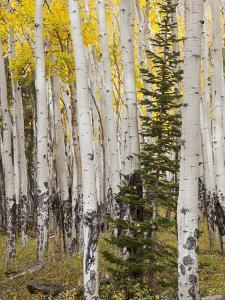 Moraine Park, Rocky Mountain National Park, Colorado, USA by Jamie & Judy Wild