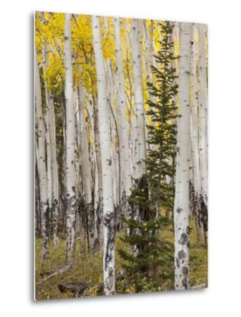 Moraine Park, Rocky Mountain National Park, Colorado, USA