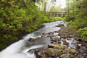 Necarney Creek, and Suspension Bridge, Oswald West State Park, Oregon, USA by Jamie & Judy Wild