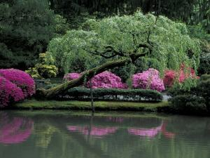 Reflecting pool and Rhododendrons in Japanese Garden, Seattle, Washington, USA by Jamie & Judy Wild