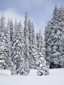 Snow-Covered Fir Trees, Mount Rainier National Park, Washington, Usa by Jamie & Judy Wild