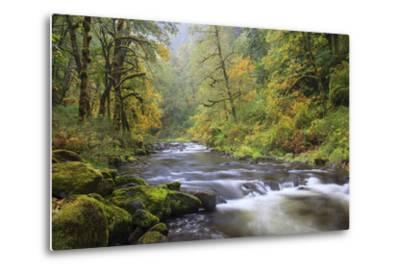Tanner Creek, Columbia River Gorge, Oregon, USA
