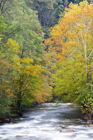 Tennessee, Great Smoky Mountains National Park, Little River