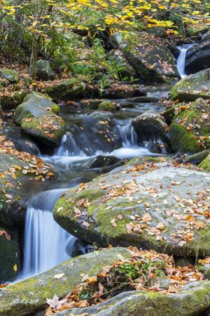 Tennessee, Great Smoky Mountains NP, Roaring Fork River