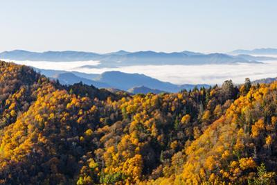 Tennessee, North Carolina, Great Smoky Mountains NP, Newfound Gap