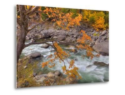 Tumwater Canyon, Maple Tree and Wenatchee River, Wenatchee National Forest, Washington, Usa