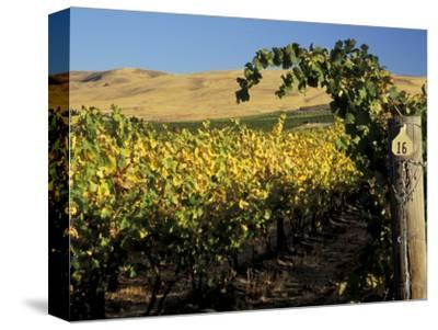 Yakima Valley Vineyards, Washington, USA