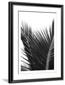 Palms 12 by Jamie Kingham