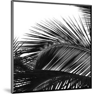 Palms 13 (detail) by Jamie Kingham