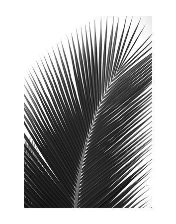 Palms 14