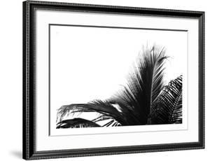 Palms 2 by Jamie Kingham