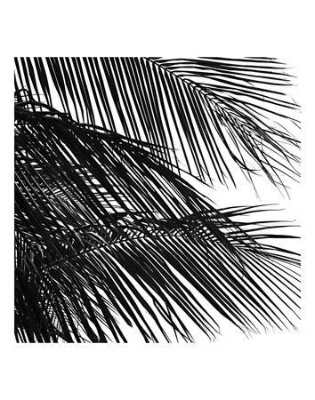 Palms 4 (detail)
