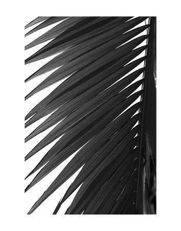 Palms 7