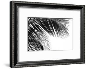 Palms, no. 11 by Jamie Kingham