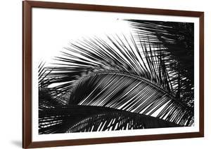 Palms, no. 13 by Jamie Kingham