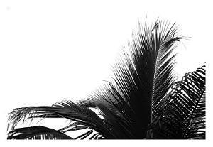 Palms, no. 2 by Jamie Kingham