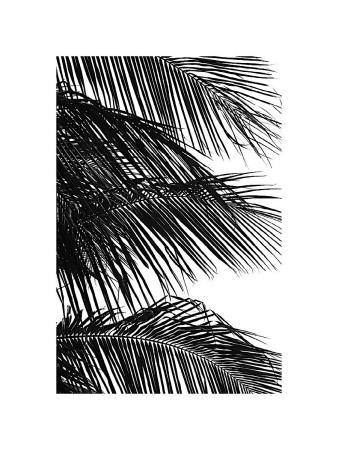 Palms, no. 4