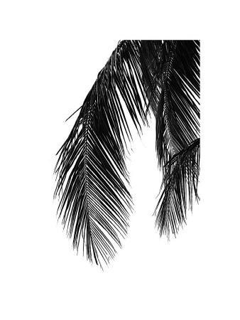 Palms, no. 5