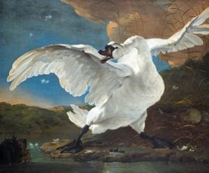 The Threatened Swan by Jan Asselijn