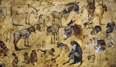 Animal Studies: Donkeys, Cats, Monkeys by Jan Brueghel the Elder