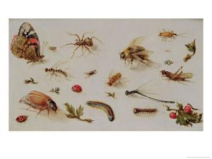 A Study of Insects by Jan Brueghel the Younger