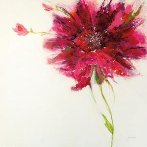 Pink Daisy on White by Jan Griggs