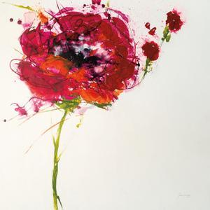 Poppy Master on White by Jan Griggs
