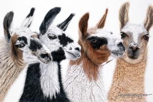 Peruvian Visitors by Jan Henderson