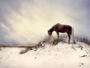 Chocolate Horse Feeding from Dry Brush by Jan Lakey