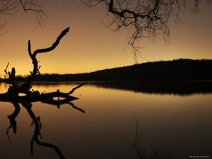 Gnarled Branches Poking out of Calm Lake by Jan Lakey