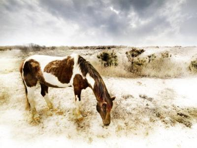 Horse Feeding off Dry Brush Growing out of Sand