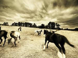 Horses Running and Playing in Barren Field by Jan Lakey