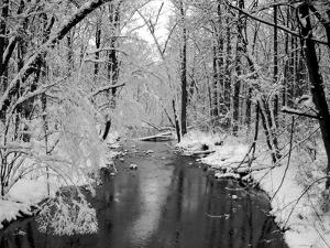 Snow Covered Trees along Creek in Winter Landscape by Jan Lakey