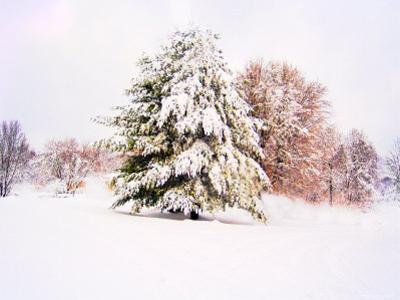 Snow Covered Trees in Winter Landscape