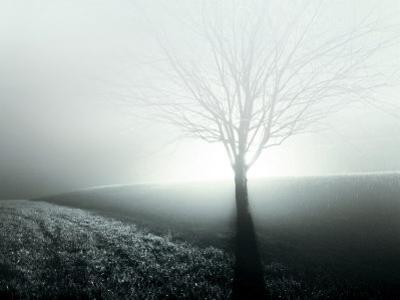 Sunlight Shining behind Lone Tree