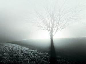 Sunlight Shining behind Lone Tree by Jan Lakey