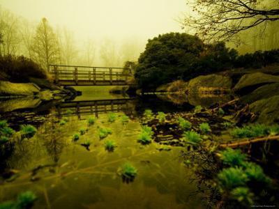 Water Plants Growing under Bridge