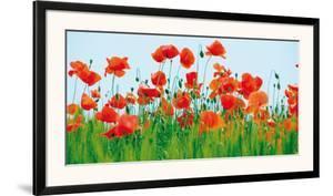 Poppy Fields by Jan Lens