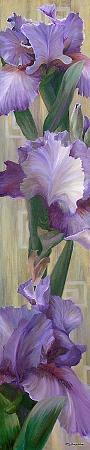 jan-mclaughlin-iris-ii