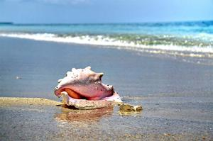 Conch by Jan Michael Ringlever