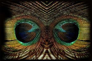 Feathered Owl by Jan Michael Ringlever