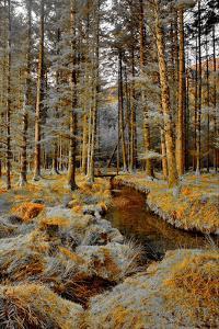 Gougane Barra Stream by Jan Michael Ringlever