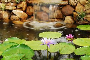 Lilly Pond by Jan Michael Ringlever