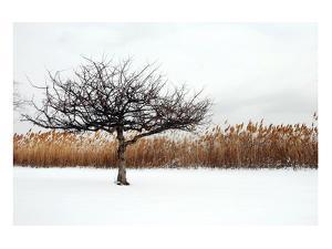 Winter Harmony by Jan Michael Ringlever