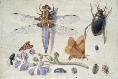 A Cockchafer, Beetle, Woodlice and Other Insects, with a Sprig of Auricula, Early 1650S